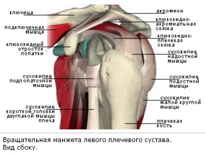 периартроз плечелопаточный