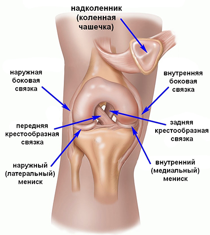 Имплантация связок коленного сустава канин для суставов собак