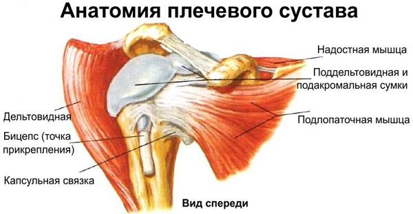 Подакромиальный поддельтовидный бурсит плечевого сустава препараты аюрведы для суставов