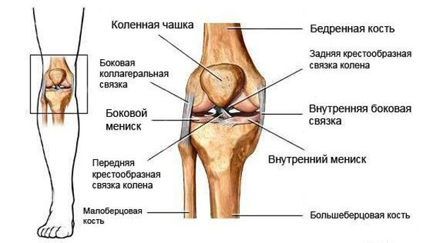 Внутри коленного сустава