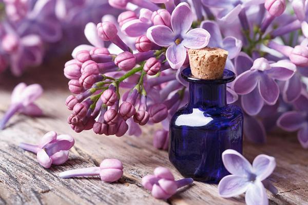 Настойка на цветках сирени рецепт