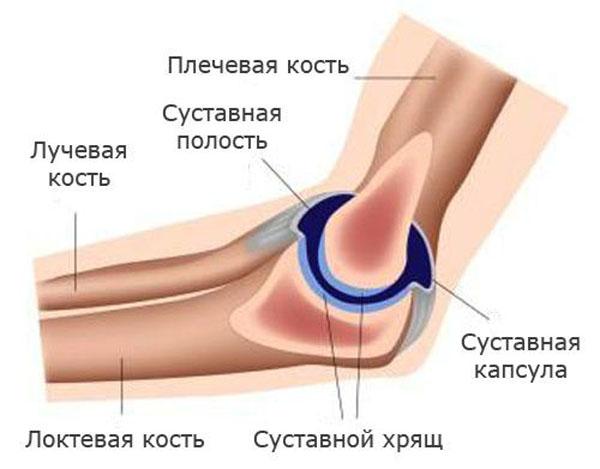 Изображение - Сужение суставной щели локтевого сустава stroenie-loktevogo-sustava