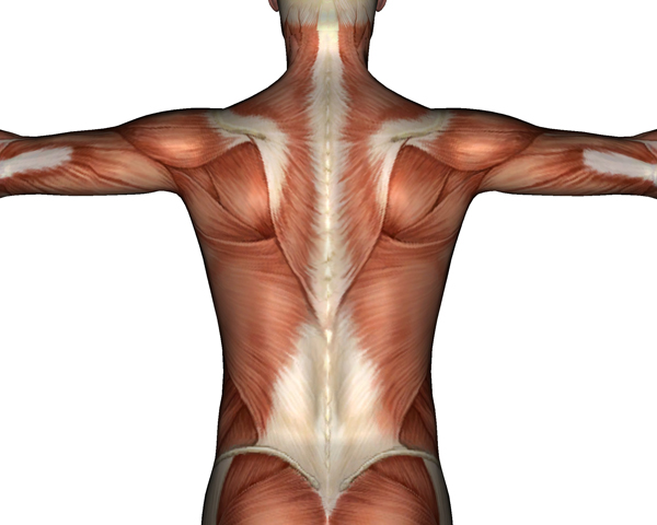 Миорелаксанты расслабляют мышцы